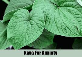 Website Kava