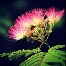 WEsite Flower